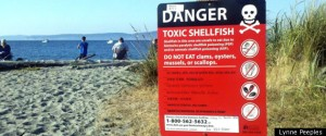 Shellfish Poisoning